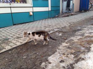 猫噴水通り2