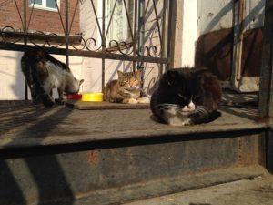 猫噴水通り1