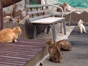 ビクトルさんの猫屋敷7