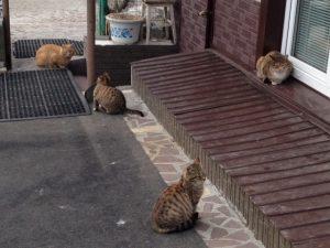 ビクトルさんの猫屋敷5