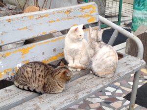 ビクトルさんの猫屋敷4