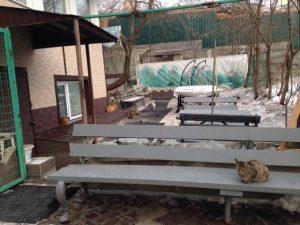 ビクトルさんの猫屋敷2