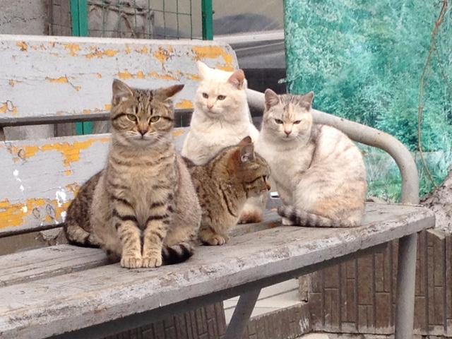 ビクトルさんの猫屋敷3