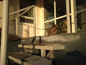 ビクトルさんの猫屋敷9